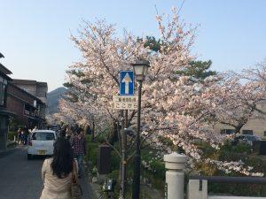 お花見シーズン!!